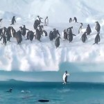 penguins-jump