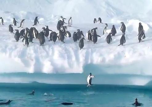 penguins-jump