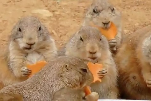 A Carrot Party!