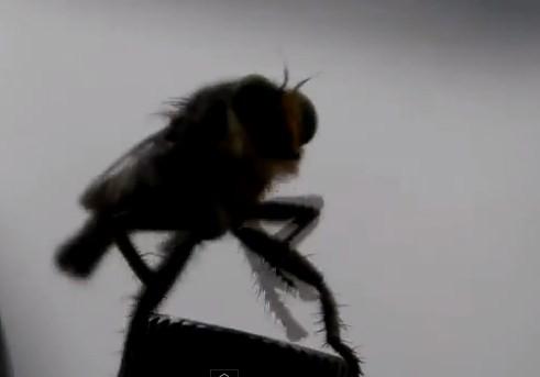 A 'Fly' Dancer