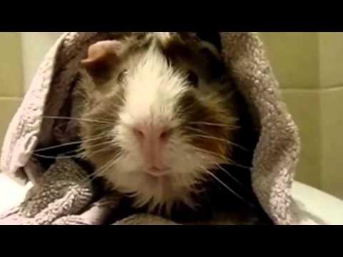 Pet Interviews