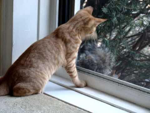 Cat Versus Squirrel