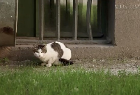 A Cat Security Guard