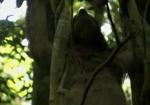 Sloths- The Next Big Internet Animal