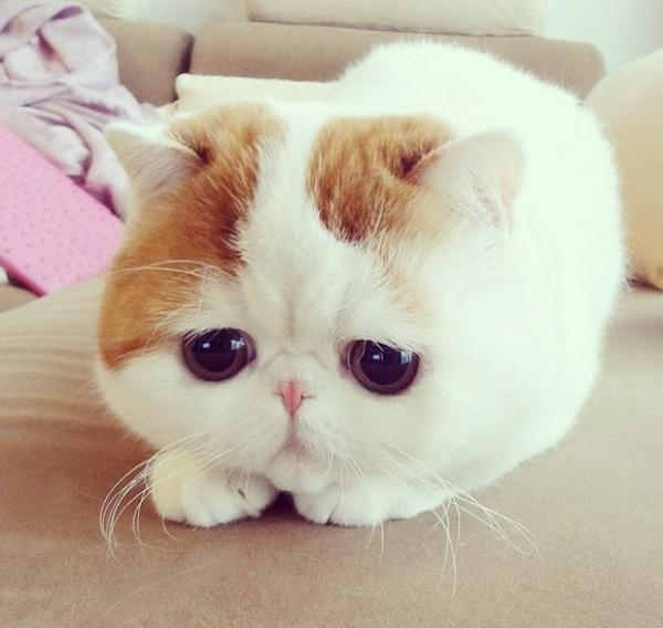 Cutest Cat Ever Face