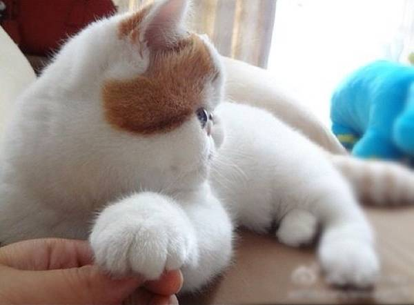 cutest-cat-ever-snoopy-paw