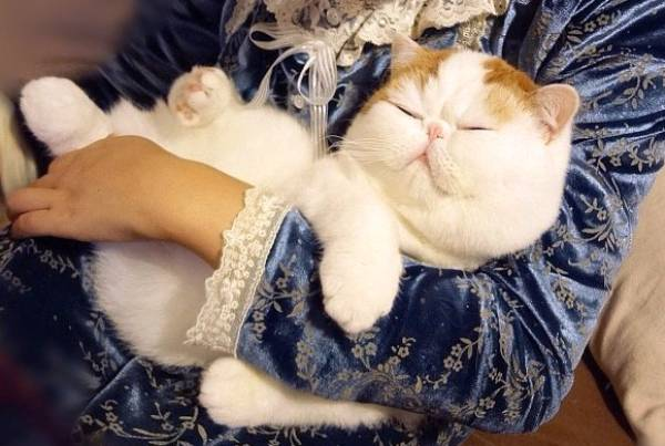 Cutest Cat Ever Sleeping In Arms