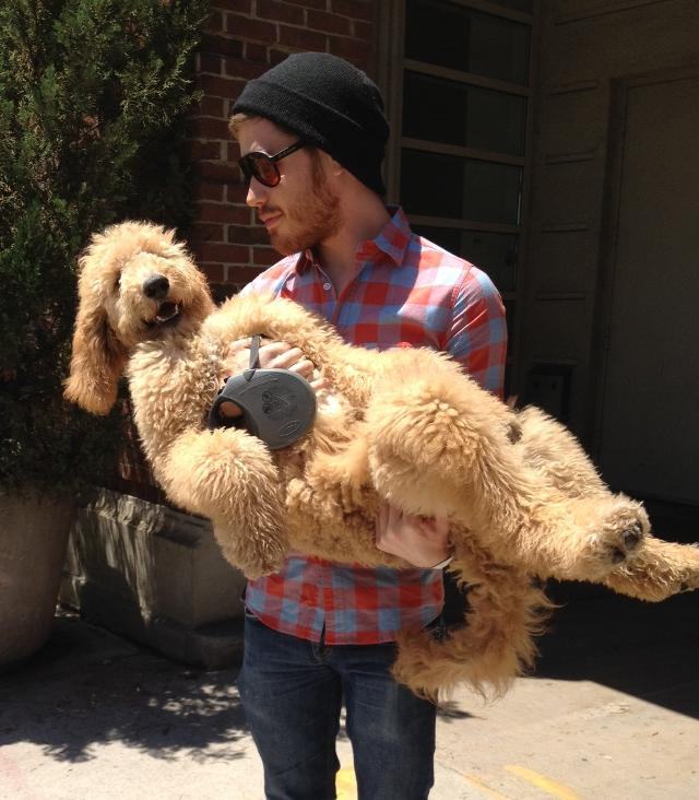 cutest-golden-doodle-puppy-arms