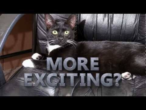 Video thumbnail for youtube video Is Your Cat Boring?