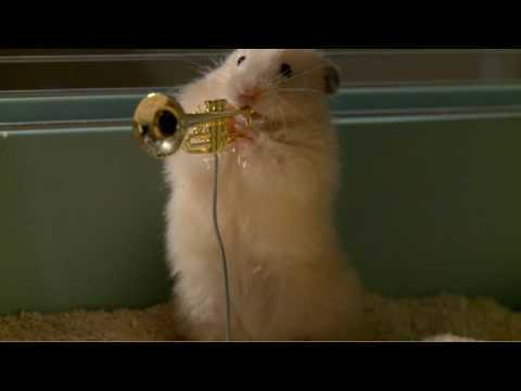 Video thumbnail for youtube video Jazz Hamsters
