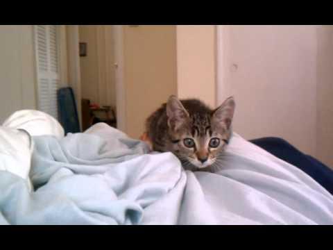 Video thumbnail for youtube video Kitten Attack!