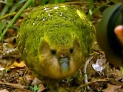 rare-parrot-mates-head