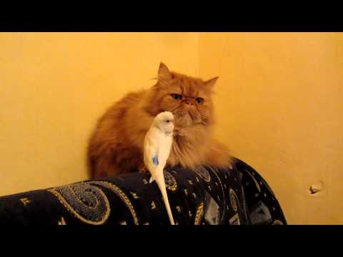 Parrot Hilariously Messes With Cat