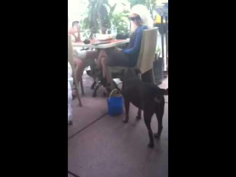 A Dog That Farms Cash