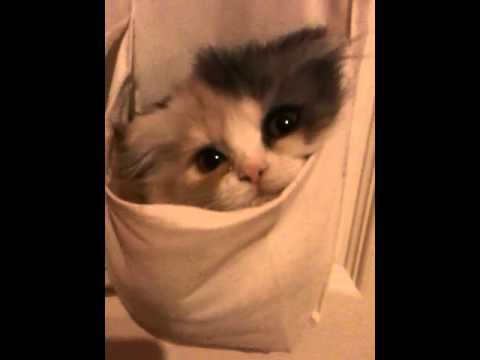 Kitten Pretends to be a Shoe