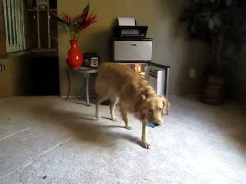 Video thumbnail for youtube video Dog Retrieves Beer For Owner