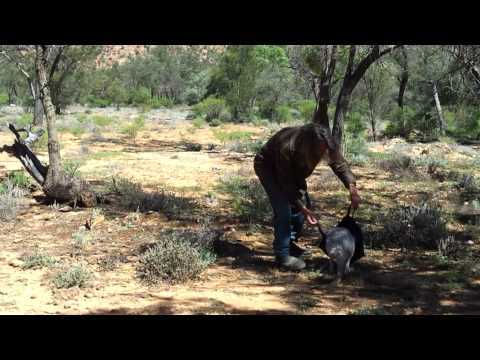 Video thumbnail for youtube video How To Catch A Kangaroo