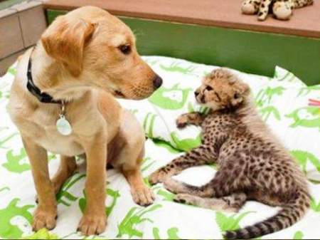 leopard-dog-friends