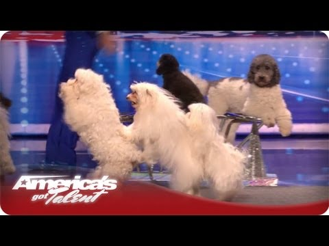Dogs Got Jump Rope Talent