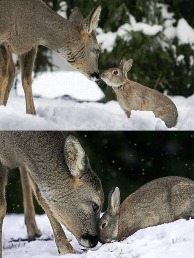 deer-rabbit-friendship