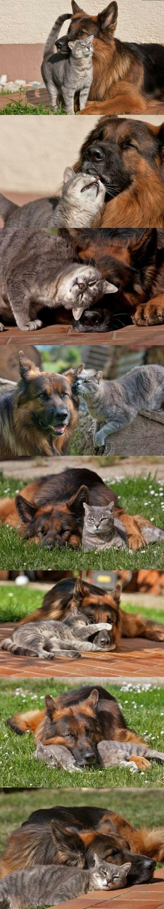 Cuddly Dog and Cat Friendship