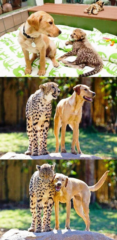 Leopard Dog Friendship