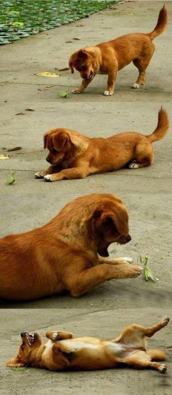 Praying Mantis and Puppy Friendship