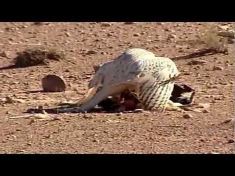 Video thumbnail for youtube video The Falcon Eye