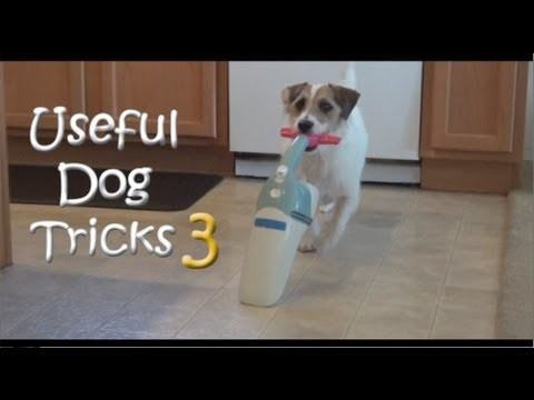 Video thumbnail for youtube video The Smartest Dog Ever