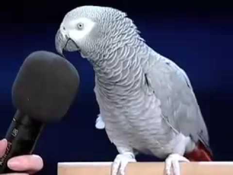 Meet The Smartest Bird Ever