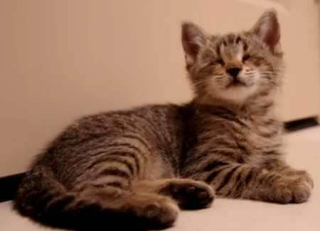 blind-cat-toys