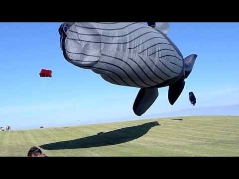 Video thumbnail for youtube video One Whale Of A Kite