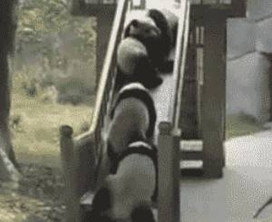 pandas-tumble-down-slide