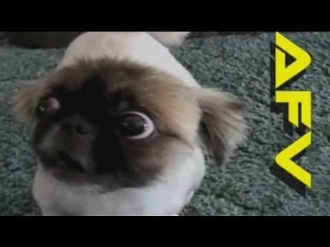 Video thumbnail for youtube video The 28 Funniest Animal GIFs Ever