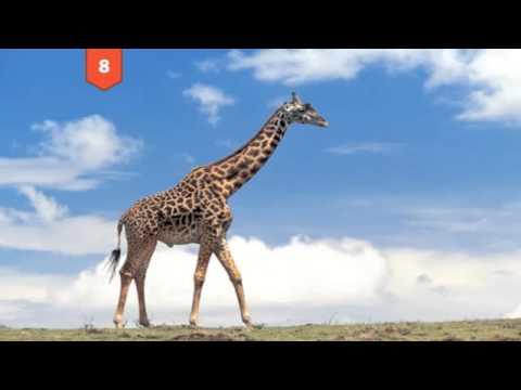 Twenty-Five Amazing Animal Facts
