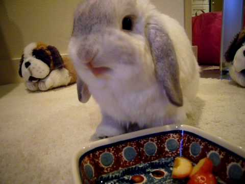 Bunny Noms On A Cherry