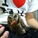 Petting An Adorable Owl