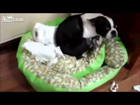 Dogs Doing Something Wrong