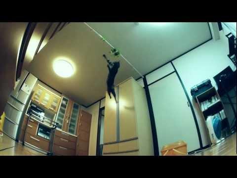 An Incredible Jumping Cat