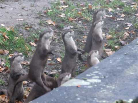 Otters Go Jumping