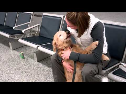 Golden Retriever Greets Her Owner Returning From Afghanistan