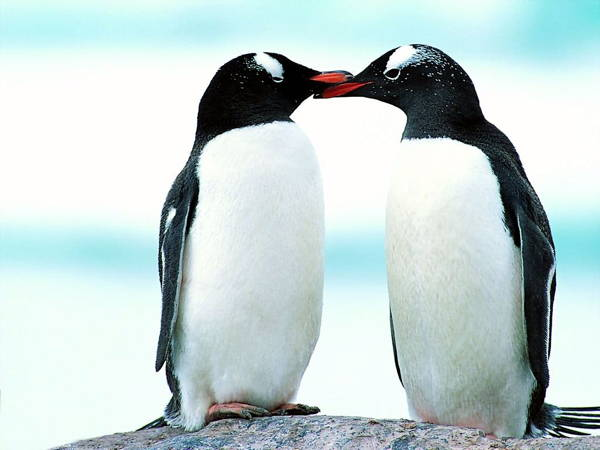 Cute Picture Of Baby Penguins