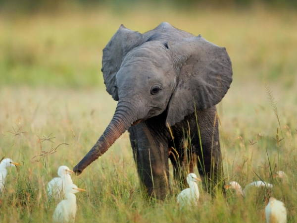 Baby Savanna Animals Elephant