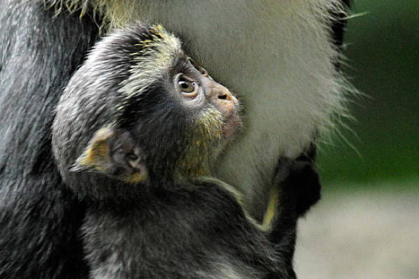 Baby Savanna Animals Monkey
