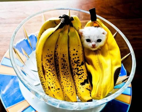 cat-costume-banana
