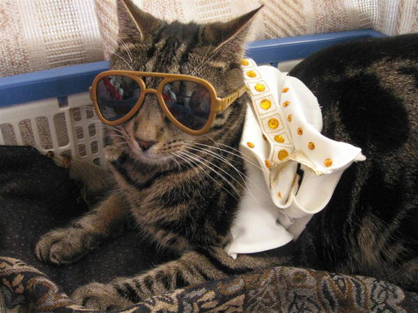 Ridiculous Cat Costume Elvis