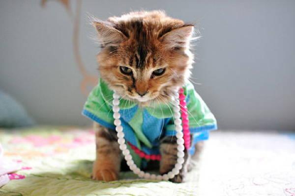 cat-costume-golden-girl