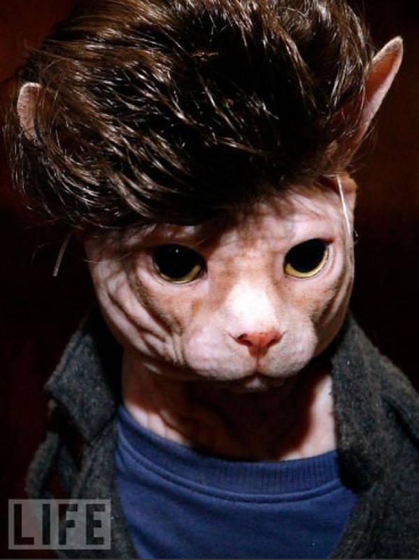cat-costume-james-dean