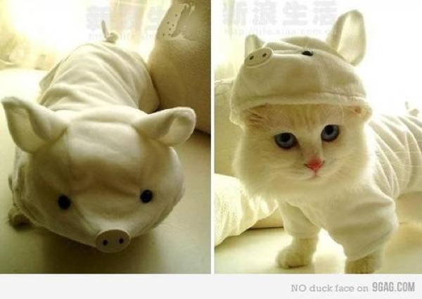 Ridiculous Cat Costume Pigs