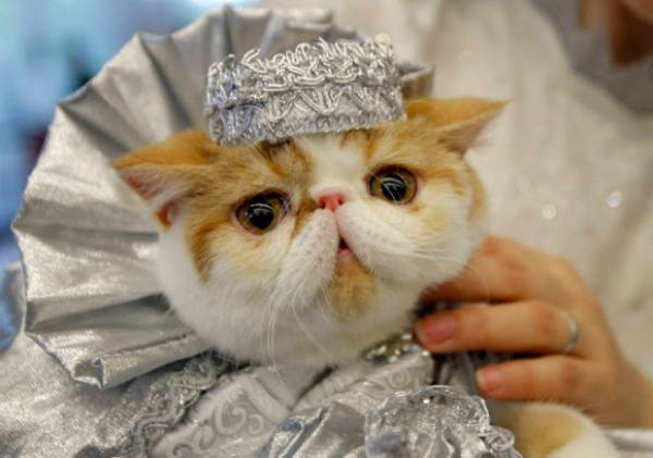 cat-costume-princess